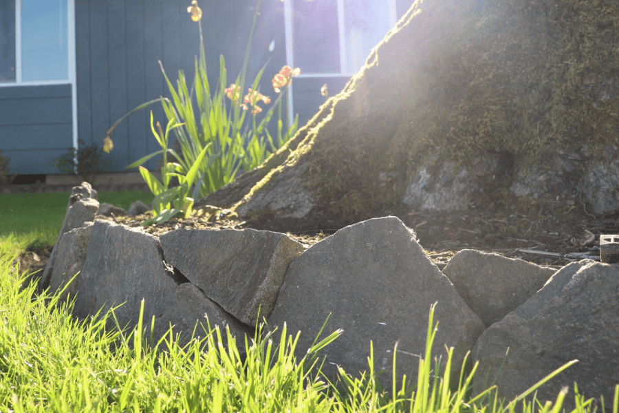 a garden border of rocks with grass in the foreground around a large tree trunk and a blue building in the background